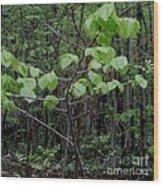 Trilliums Grow Deep Inside Forest Wood Print