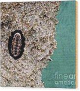 Trilobite Wood Print