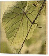 Trinity Grape Leaves Wood Print by Amy Neal