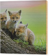 Trio Of Fox Kits Wood Print by Everet Regal