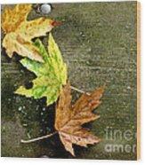 Trio Of Leaves Wood Print