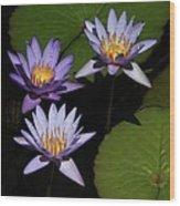 Trio Of Purple Water Lilies Wood Print
