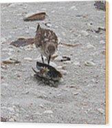 Trio Of Shore Birds Wood Print