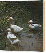 Triple Ducks Wood Print