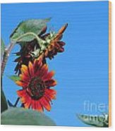 Triple Red Sunflowers Wood Print
