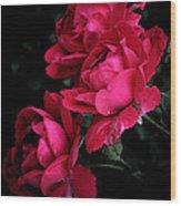 Triple Rose  Wood Print