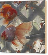 Triple Tail Goldfish Wood Print