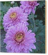 Triplets Of Purple Mums Wood Print