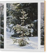 Triptych - Christmas Trees In The Forest - Featured 3 Wood Print