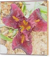 Tristar Iris Wood Print