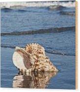Triton Seashell Wood Print
