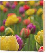 Triumphant Tulips Wood Print