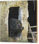Troglodyte Pig Wood Print
