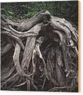 Troots Of A Fallen Tree By Wawa Ontario Wood Print