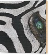 Trophy Hunter In Eye Of Dead Zebra Wood Print