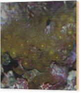 Tropica Fish Wood Print