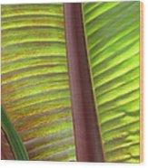 Tropical Banana Leaf Abstract Wood Print
