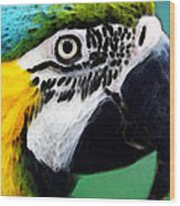 Tropical Bird - Colorful Macaw Wood Print