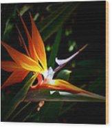 Tropical Bloom Wood Print