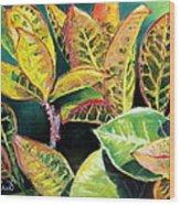 Tropical Colorful Croton Leaves Wood Print by Prashant Shah