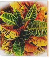 Tropical Croton Vignette Wood Print by Lisa Cortez