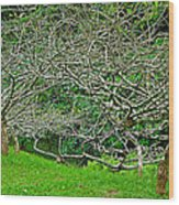 Tropical Entanglement Wood Print