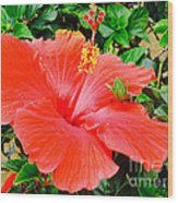 Tropical Explosion Wood Print
