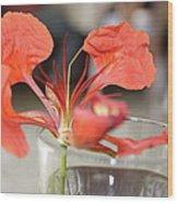 Tropical Flamboyant Flower Wood Print