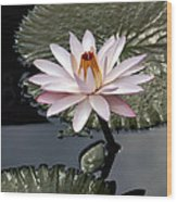 Tropical Floral Elegance Wood Print