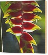Tropical Flower 1 Wood Print