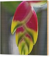 Tropical Flower 2 Wood Print