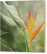 Tropical Flower Wood Print by Natalie Kinnear