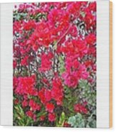 Tropical Flowers Of South Florida Wood Print