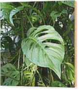 Tropical Green Foliage Wood Print