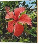 Tropical Hibiscus 002 Wood Print