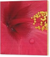 Tropical Hibiscus - Antigua Wind 01 Wood Print