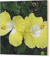 Tropical Hibiscus - Bonaire Wind 01 Wood Print