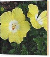 Tropical Hibiscus - Bonaire Wind 02 Wood Print