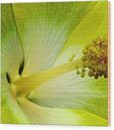 Tropical Hibiscus - Bonaire Wind 06a Wood Print
