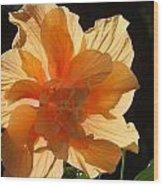 Tropical Hibiscus In The Sun Wood Print