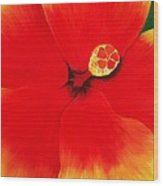 Tropical Hibiscus Painting Wood Print