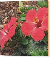 Tropical Hibiscus - Starry Wind 01 Wood Print