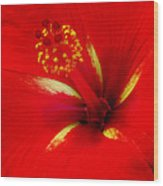 Tropical Hibiscus - Starry Wind 02a Wood Print