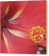 Tropical Hibiscus - Starry Wind 04 Wood Print