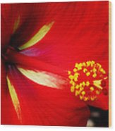 Tropical Hibiscus - Starry Wind 04a Wood Print