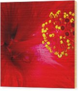 Tropical Hibiscus - Trinidad Wind 02a Wood Print