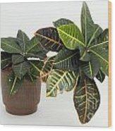 Tropical Houseplant Wood Print