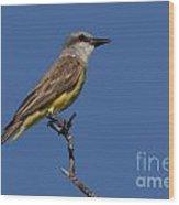 Tropical Kingbird Wood Print