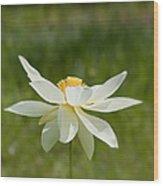 Tropical Lotus Flower Wood Print