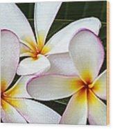 Tropical Maui Plumeria Wood Print